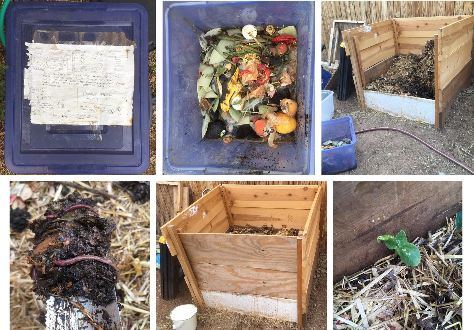 """In the far reaches of our state office's small kitchen corner sits a box clearly marked, """"COMPOST"""" in black-inked letters. Daily, Audubon New Mexico ..."""