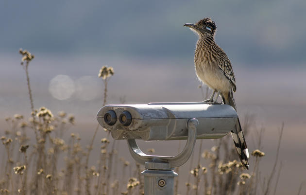 Audubon New Mexico's Virtual Birdathon 2020