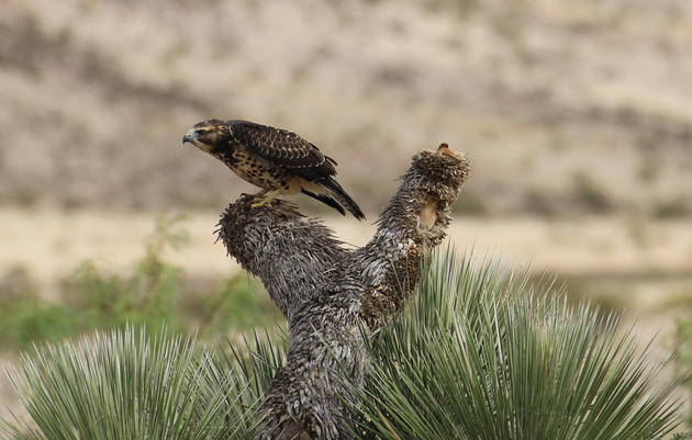 Birding Trails in New Mexico