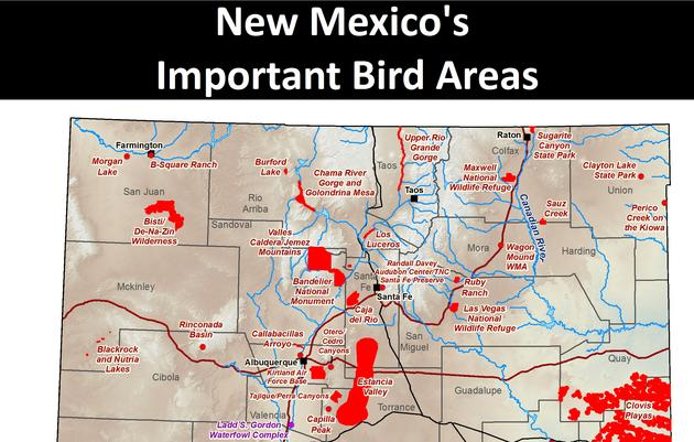 Priority IBAs in New Mexico