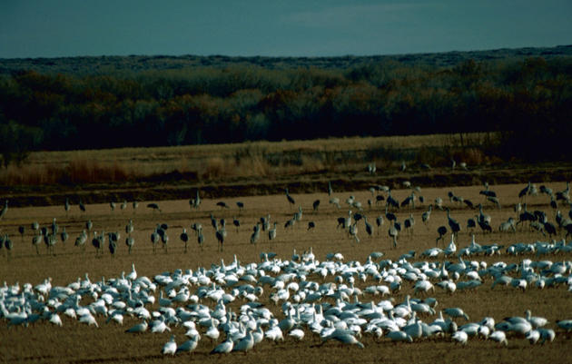 Audubon New Mexico IBA Designated a Ramsar Site