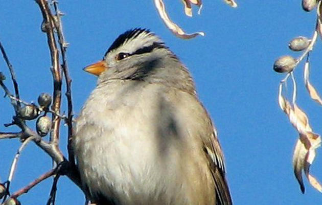 Audubon New Mexico's Christmas Bird Count