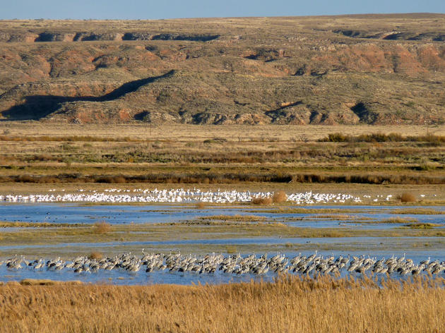 Recognition for New Mexico's Biodiversity: New Global IBAs!