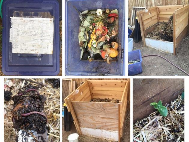 Is Homemade Compost better for growing healthier plants than plant food from a store?